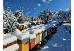Quando arriva l'inverno: dove sono le api???