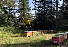 Chi è l'apicoltore?